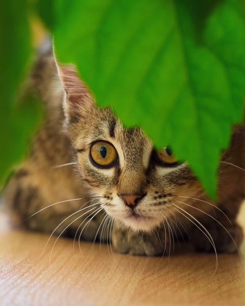 Plants that are toxic to cats, Memphis vet