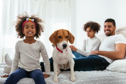 Best dogs for kids, beagle