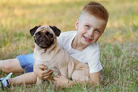 Best dogs for kids, pug