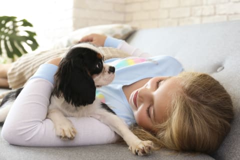 Best dogs for kids, King Charles Spaniel