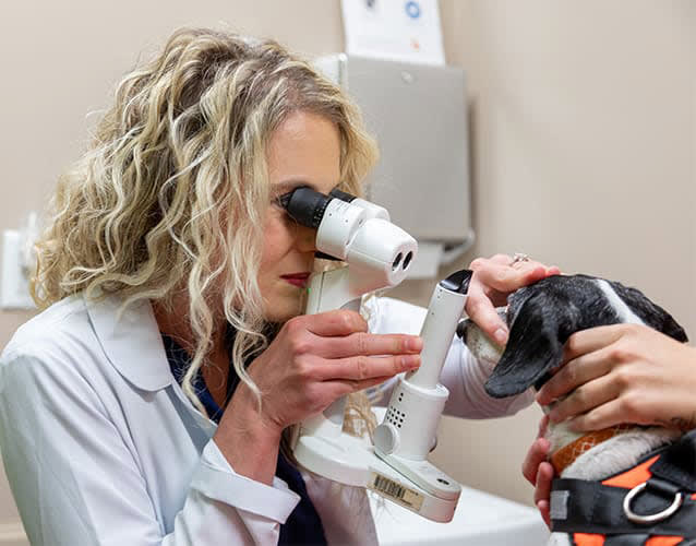 Ophthalmology Services | Memphis Veterinary & Emergency | Cordova, Tennessee